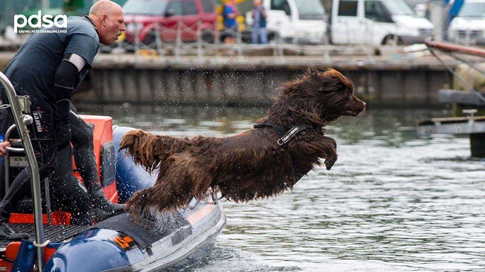PDSA's Big Doggy Paddle